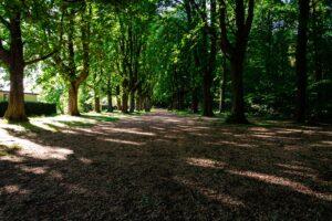 De Groenen Linden